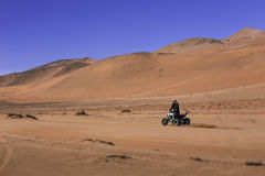 Vierling die in woestijn II rennen stock afbeelding