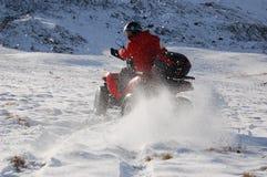Vierling in sneeuw Stock Foto