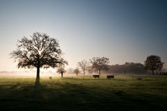 Vierlingsbeek, the Netherlands. Scenic view of a foggy morning in autumn Royalty Free Stock Photography