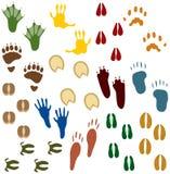 Vierzehn Sets der Tierspuren Stockfotos