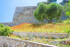 Vieste, Italië - Papavergebied bij de historische vesting van Vieste royalty-vrije stock foto