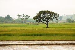 Viet Nam countryside Stock Photo
