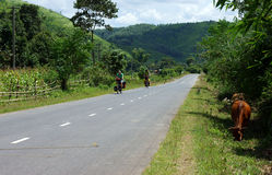 Traveller ride bicycle on the road conect Dalat to Royalty Free Stock Images
