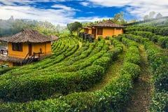 Vieti la casa tailandese di Ruk sul fondo di scena della natura della collina Fotografia Stock