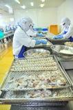工作者在Vietn湄公河三角洲的海鲜工厂重新整理在盘子上的被剥皮的虾放入冻机器  免版税库存照片