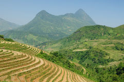 VIetnam Stock Photography