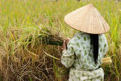 VIetnam Royalty Free Stock Photography