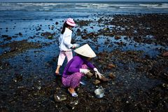 Vietnam. Ese, the mother took the children are picking up seafood royalty free stock photos