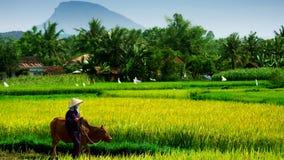vietnam Imagem de Stock Royalty Free