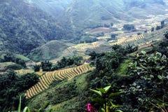 vietnam Lizenzfreie Stockfotos