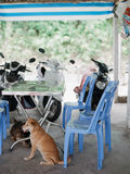 vietnam Stock Foto