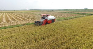 Combine harvester cutting rice on the paddy field