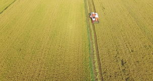 Combine harvester running amids golden rice field in Tay Ninh province, Vietnam. stock video