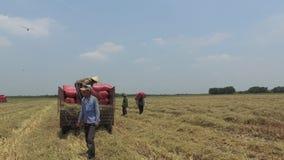 VIETNAM APRIL 15: Skördetröska som arbetar på fältet i Tay Ninh lager videofilmer