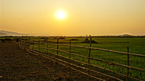 Vietnam bygd på solnedgången, sol, bambustaket Arkivbild