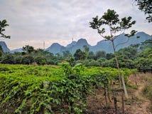 Vietnam cat ba island by day Stock Image