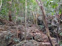 Vietnam cat ba island by day Stock Photography