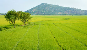 Vietnam countryside landscape, rice field stock photo