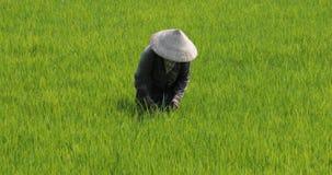 Vietnam, Daklak-provincie, 21 het jaar van Maart 2019 stock videobeelden