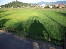 Vietnam elephant shadow walk Royalty Free Stock Image