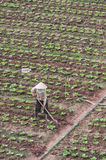 Vietnam farm worker Royalty Free Stock Photos