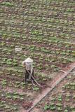 Vietnam farm worker. Vietnam farmer or worker in a field of growing plants Royalty Free Stock Photos