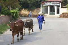 Vietnam Farmer Royalty Free Stock Photos