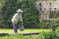 Vietnam Farmer Royalty Free Stock Image