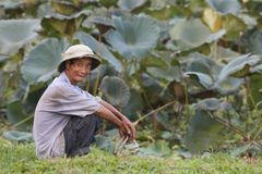 Vietnam Farmer Stock Photo