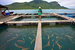 Vietnam Fish Farmer Stock Image