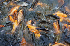 Vietnam fish farming Royalty Free Stock Photos
