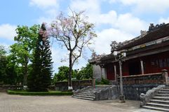 Vietnam - Hue - Inside the citadel -cherry blossom and buildings Royalty Free Stock Image