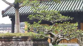 Vietnam. Imperial Royal Palace in Hue.The forbidden city of the emperors stock video footage