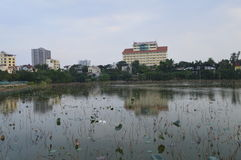 Lake in a city. Lake in Hanoi, Vietnam with many tropical water lilies and large buildings in the background stock photography