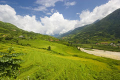 Vietnam Landscape. View of the lush green rolling rice paddy fields in Sapa, Northern Vietnam Royalty Free Stock Photos
