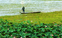 Vietnam landscape at Mekong Delta. Vietnam landscape for travel at Mekong Delta, man stand on row boat move on river, lotus flower bloom in pink, wonderful sight Royalty Free Stock Images