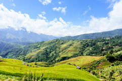 Vietnam-Landschaft: Reis-Terrassen in MU Cang Chai, Yen Bai, Viet Nam stockfoto
