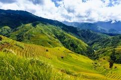 Vietnam landskap: Risterrasser på Mu Cang Chai, Yen Bai, Viet Nam Arkivbilder