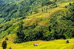 Vietnam landskap: Risterrasser på Mu Cang Chai, Yen Bai, Viet Nam Royaltyfri Foto