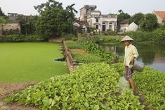 Vietnam-Landwirt Stockfotografie