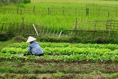 Vietnam - landwirtschaftliche Szene lizenzfreies stockfoto