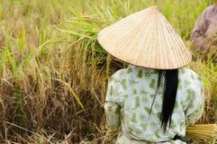 Vietnam - landwirtschaftliche Szene stockfotos