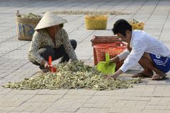 Vietnam locals drying herbs on the street Stock Photos