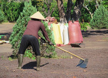 Vietnam man working in coffe plantation Royalty Free Stock Photos