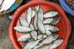 Vietnam Market. A variety of food products they sell Royalty Free Stock Photography