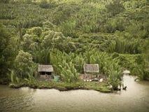 Vietnam mekong delta. River bank farming Stock Photos