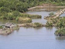 Vietnam mekong delta. River bank farming Royalty Free Stock Photos