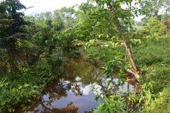 Vietnam - min son - flod och djungel på min sonfristad Royaltyfri Fotografi