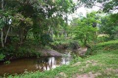 Vietnam - min son - flod och träd på min son Royaltyfri Fotografi
