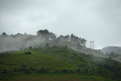 Vietnam morning fog Stock Image